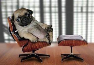 chair pug